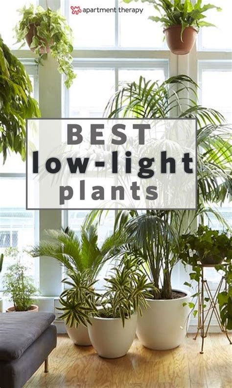 8 houseplants that can survive urban apartments low light