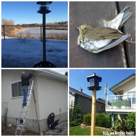 And Their Feeders Bird Feeders And Their Effect On Bird Window Collisions