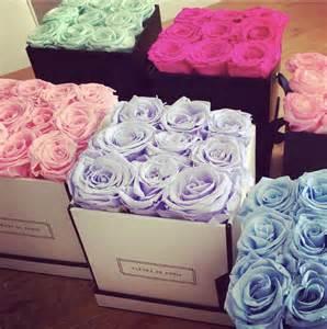 Roses Flower - 4ever40 187 living