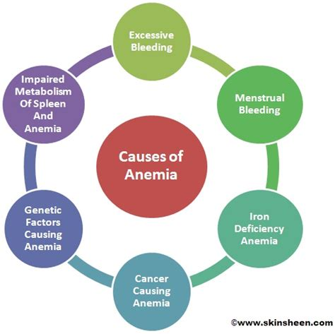 What Could Be The Cause Of Blood In Your Stool by What Causes Anaemia Reasons For Deficiency Of Blood