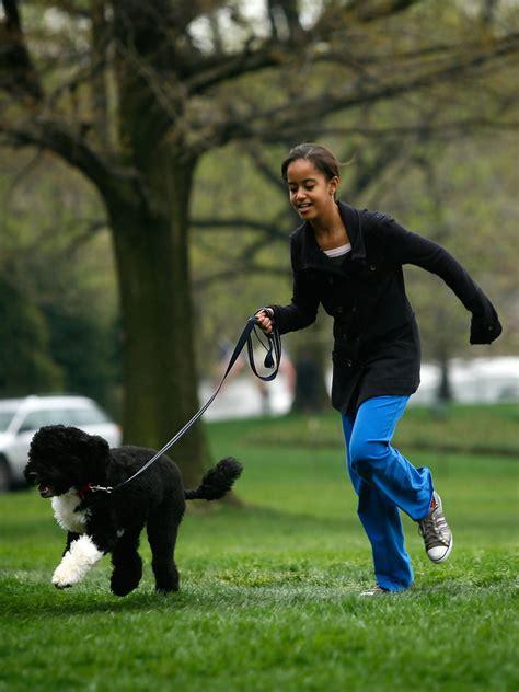 white house dogs obama malia obama photos photos the white house debuts the obamas new dog bo a portuguese water dog zimbio