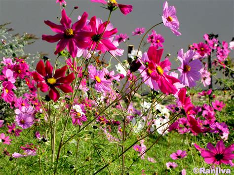 Joli Nom De Fleur by Des Fleurs Ch 234 Tres Et Le Printemps Paysages Et Fleurs