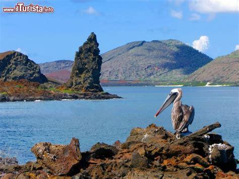 camino vulcanico un pellicano fotografato con la famosa roccia foto