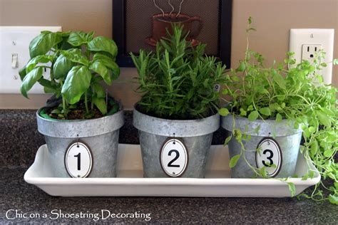 kitchen herb pots chic on a shoestring decorating kitchen herbs in numbered