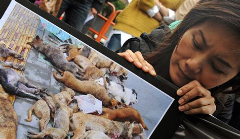 what countries eat dogs taiwan becomes country in asia to ban ie