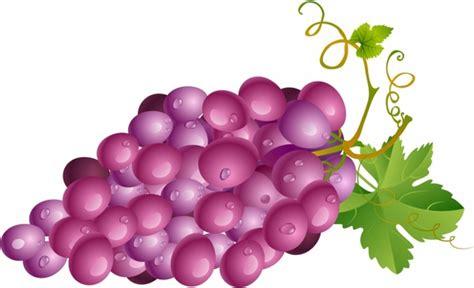 wallpaper daun anggur grape free vector download 413 free vector for