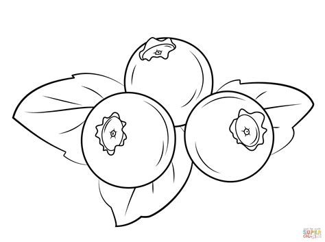 coloring pages free com blueberry coloring page coloring home