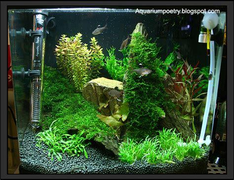 Evolution Aquasoil Aquatic Soil my aquarium scapes 37 liter planted nano cube