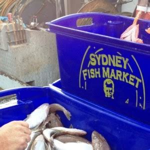 commercial fishing boat and licence for sale nsw licences seavine marine