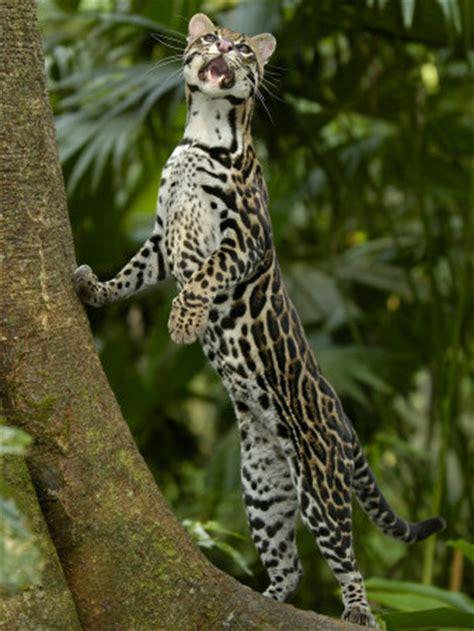 amazon rainforest animals worldtravel amazon rainforest animals pictures