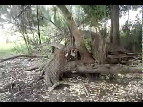 imagenes reales de duendes casa de los duendes en ocotlan jalisco youtube