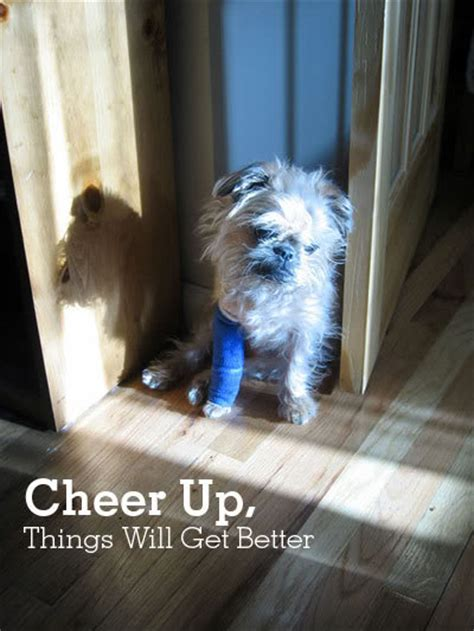 cheer up puppy pics for gt cheer up