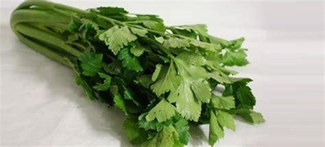 sedano verde vendita piantine di sedano verde