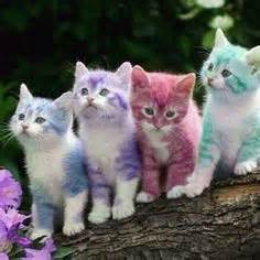 color kittens 1000 images about magnificent colorful fur mane on