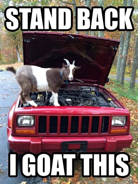 Billy Goat Meme - 30 funny animal captions part 20 30 pics amazing