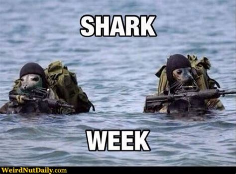 Shark Week Meme - funny pictures weirdnutdaily shark week seal style