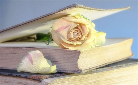 imagenes de rosas sobre libros foto gratis rosa libro libro antiguo flor imagen