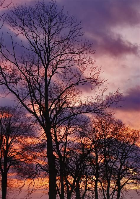 imagenes naturaleza invierno fotos gratis paisaje 225 rbol naturaleza rama invierno