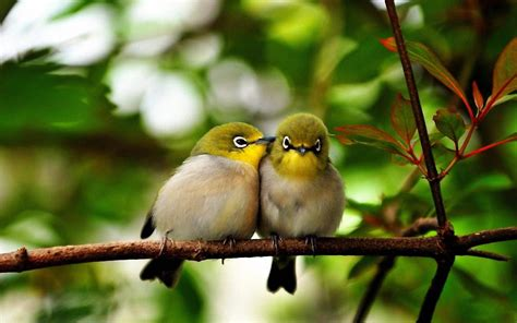 bird couple wallpaper hd 2048 cute birds
