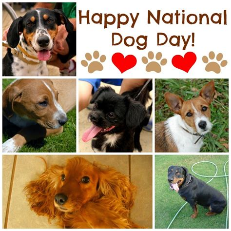 puppy day per your pooch on national day pawsitively pets
