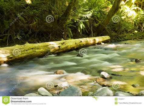 pacific northwest design royalty free stock photos image olympic national park royalty free stock photography
