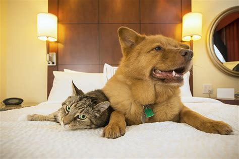 best pet friendly hotels petset a website for humans and their best friends