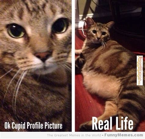 Ok Cupid Meme - ok cupid profile picture cat meme cat planet cat planet