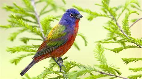 beautiful birds wallpaper 306927