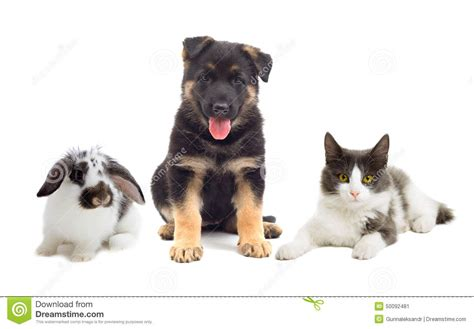 cat and dog and rabbit stock photo image 50092481