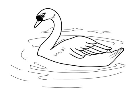 Pictures To Color Pictures To Colour Swans by Pictures To Color