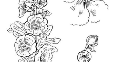 hollyhocks coloring page  fun flowers pinterest