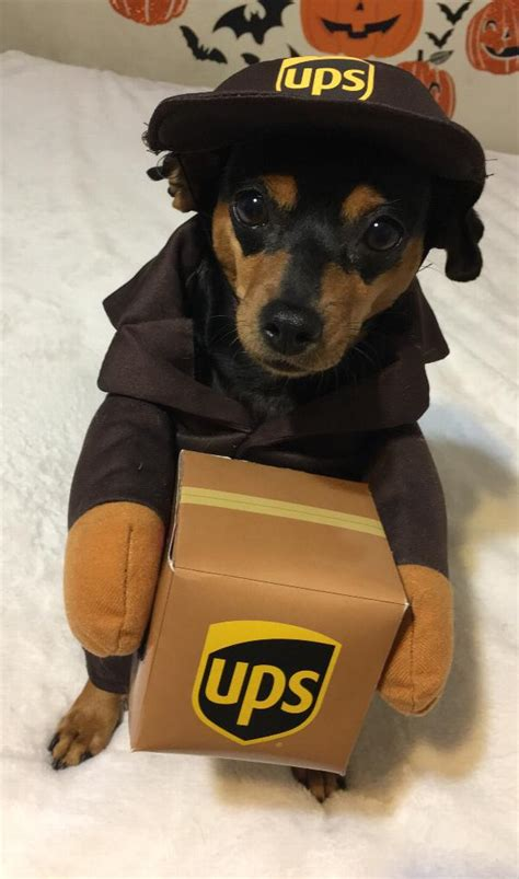 puppy pals costume ups pal costume with same day shipping baxterboo