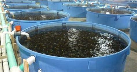 Jenis Pelet Apung Lele cara ternak ikan lele dalam drum plastik dan besi yang benar