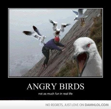 Funny Angry Memes - angry birds in real life damn lol