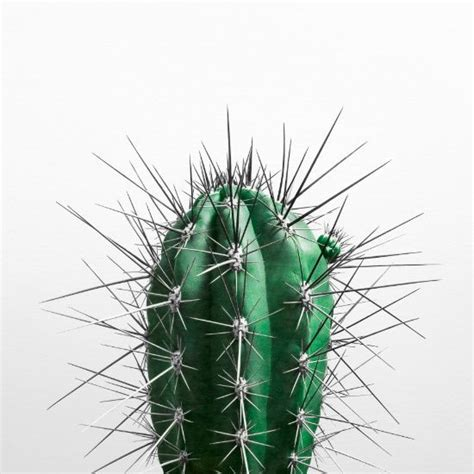 front view grch pinterest decorate your walls with this cool cactus art print from