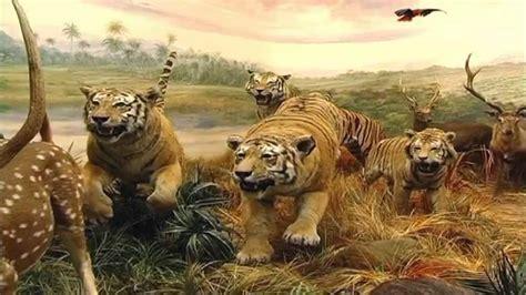 la fauna pictures sala 5 asia la jungla asi 225 tica museo de la fauna salvaje youtube