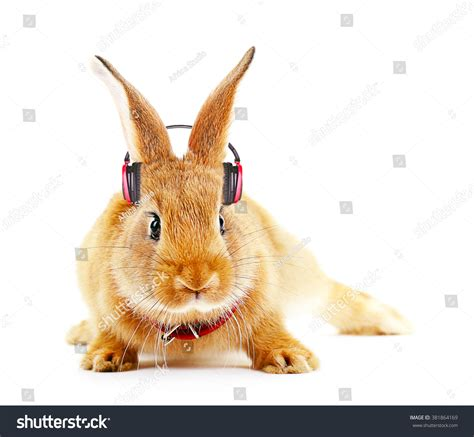 Rabbit Earphone With royalty free rabbit with headphones isolated on