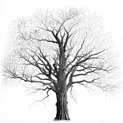 tree drwing elm tree no leaves branch structure elm the tree