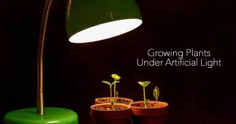Patio Lights Ideas What You Need To Know For Growing Plants Indoors Under