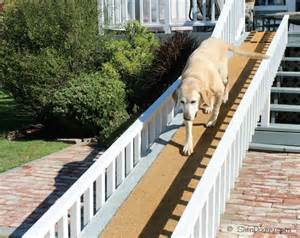 What To Do If Your Dog Goes Blind The Things We Do For Our Dogs Slimdoggy