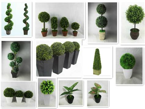 Teflon Eco Green wholesaler topiary plants topiary plants wholesale