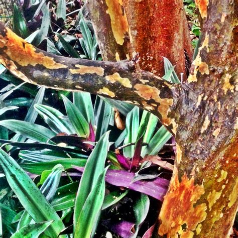 fern rock garden apartments 30 best staghorn fern images on staghorn
