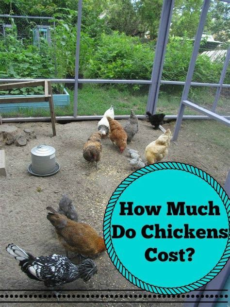 How To Raise Ducks In Your Backyard by 1000 Images About Hbn Poultry Chickens Ducks Geese
