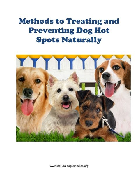 home remedies for hotspots on dogs naturally treating a for spots