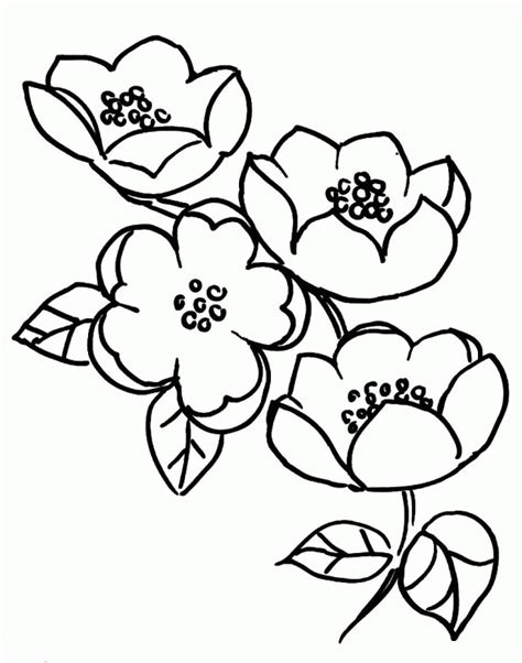 apple blossom coloring page coloring home