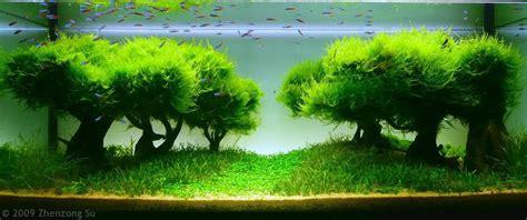 aquarium ideen aquarium designs zum integrieren in der wohnung