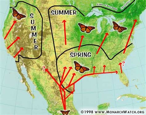 monarch watch migration tagging tagging monarch watch migration tagging spring migration
