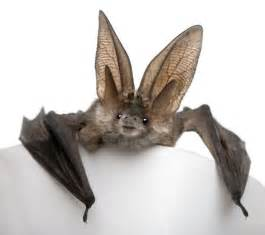 Bats In 12 Images And Facts About Misunderstood Bats Mnn
