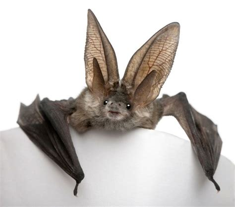 12 images and facts about misunderstood bats mnn