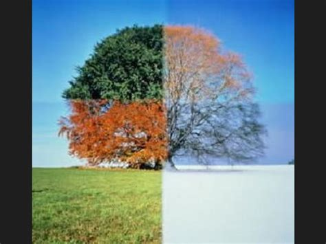 imagenes de invierno otoño verano primavera ranking de oto 241 o invierno primavera o verano 191 de qu 233